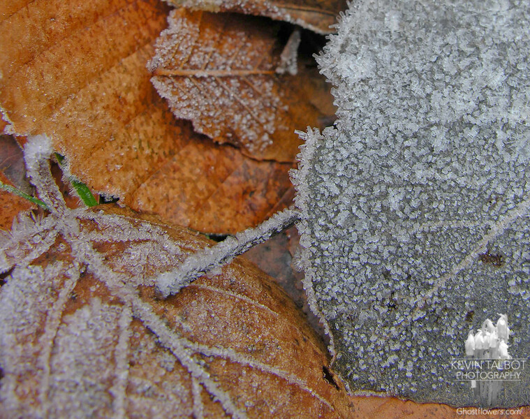 Frosted leaves at the trailhead.