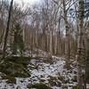 Entering the birch glades...