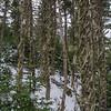 More Treebeard...