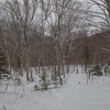 Beautiful open woods down low.