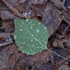 Frozen waterdrops on this leaf Sabrina found.