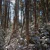 Through beautiful woods.