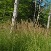Tall, late summer grass along the trail.