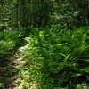 Lush undergrowth.
