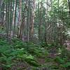 Birch glades.