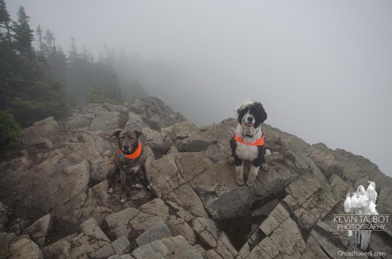 Summit of Mount Flume...