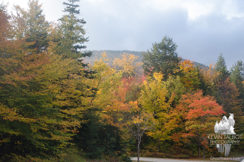 Sun and beautiful foliage back at the parking area...