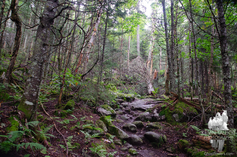 Mixed forest will soon give way to conifers as we ascend...