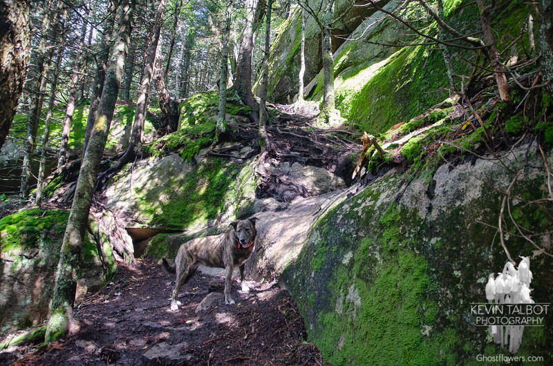 Wicket waits at a tricky scramble up to Owlshead...