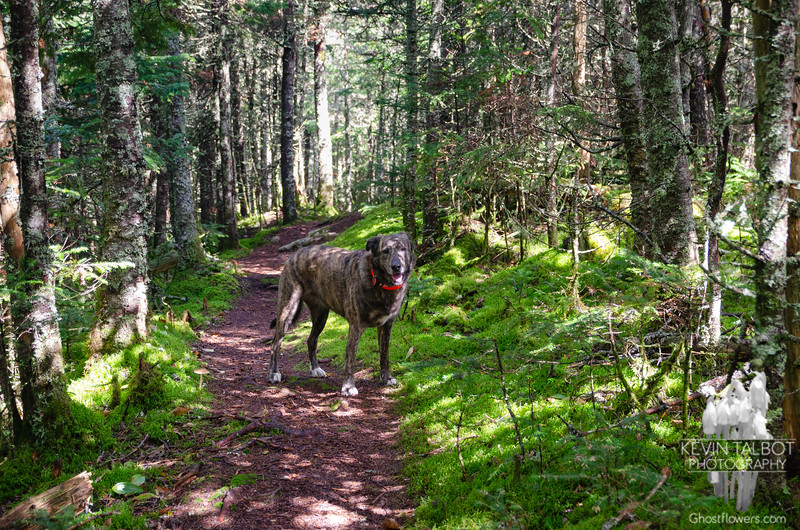 She is really almost as at home here as Emma was. She has become such a great trail dog, I think she must have a little bit of Emma's heart & soul in her...