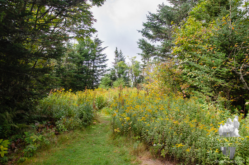The site of the former fire tower is now heavily overgrown...