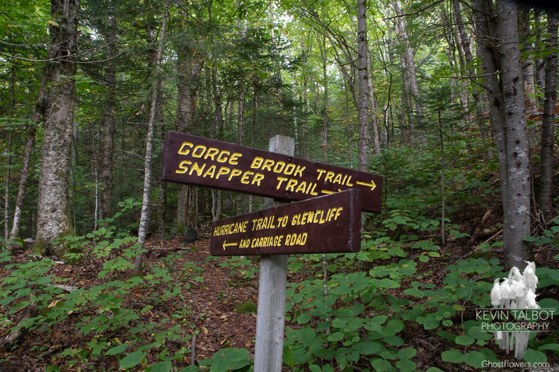 First trail junction...