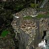 Stump full of mushrooms.