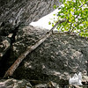 Birch tree in a cleft of the rock.