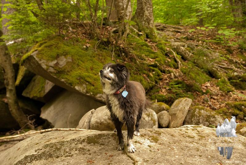 Emma on alert for moose.