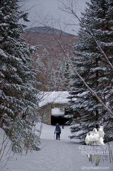 Three wildlife tunnels.