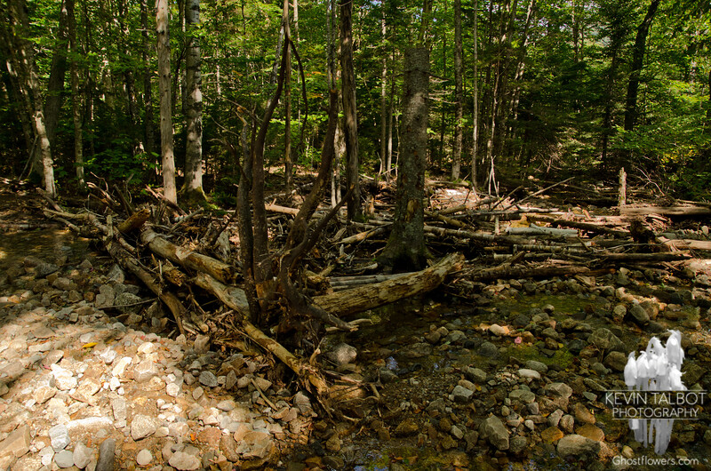 Brook bed at the start of Mount Willard Trail.