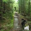 Wet Kinsman Ridge Trail.
