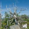 Skeleton tree on Castles.