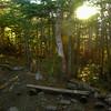 Golden sun lights the forest around Imp Shelter.