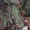 Mushrooms at camp...