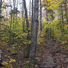Mid autumn trail.