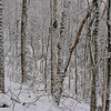 Snow-dappled trees along the trail.
