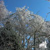 Crystal Branches 2.