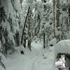 Powder covered trees.