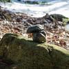 Neat mushroom cairn