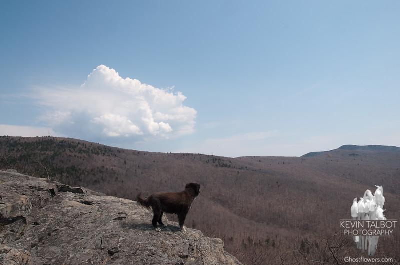 Emma surveys the bare forest below.