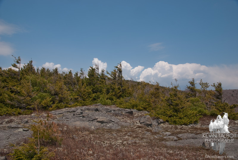 Some coniferous forest as we approach the summit.