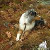 Terra. Such a beautiful dog!