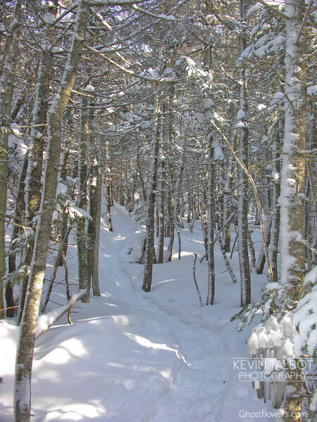 Packed trail through new snow.