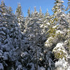 New powder on the trees at the summit of Passaconaway.