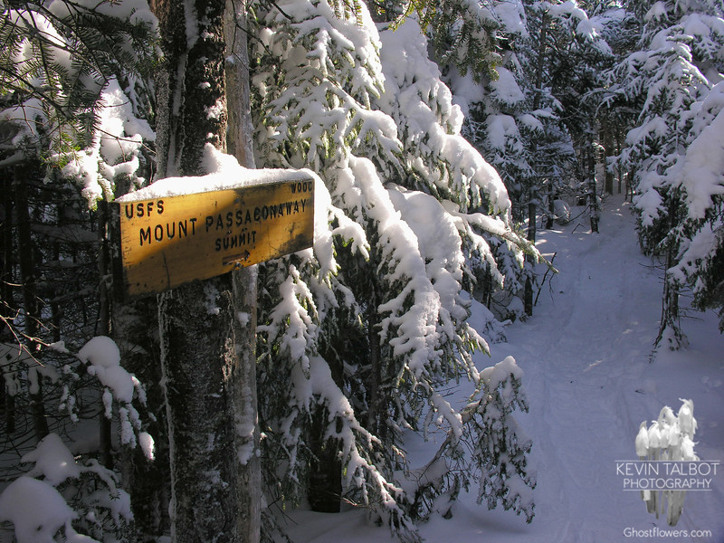 Short path to the treed summit.