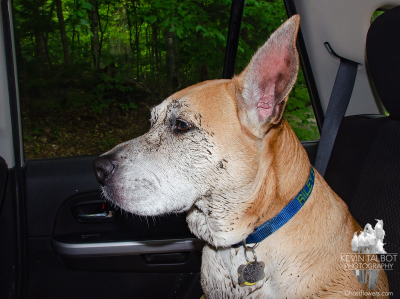 """Riley found some lovely mud about 50' feet from the car. She said, """"I don't know why we had to do such a long walk when all I wanted was right here!"""""""