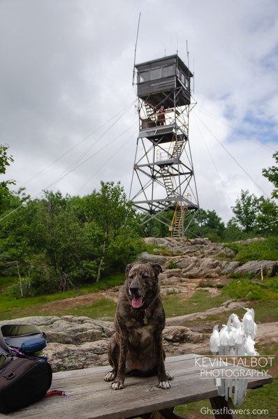 """Summit shot... will post to """"Dogs of Red Hill"""" FB Group..."""