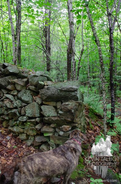 Wicket checks out a beautiful right angle in the stone wall...