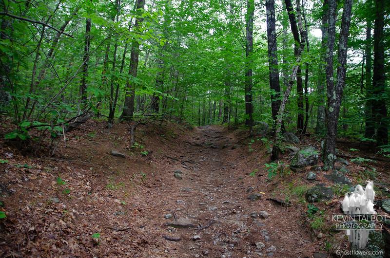 The trail, was still pretty dry despite the previous few days rain...