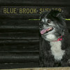 Emma checks out the Blue Brook Shelter.
