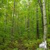 Lovely woods!
