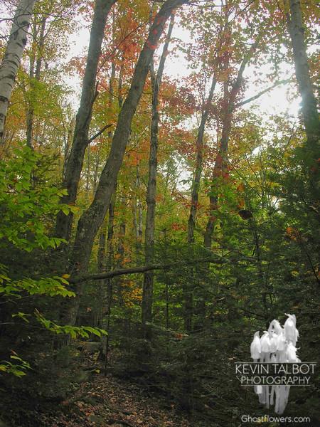 Autumn colors along the trail.