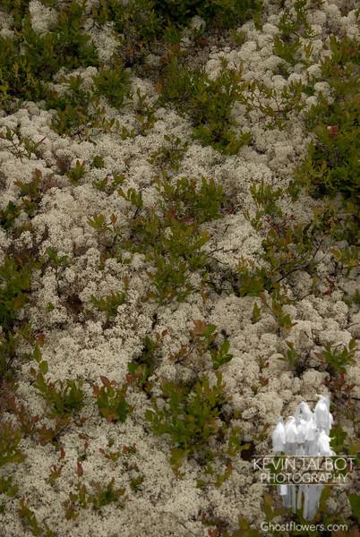Lichen and such.