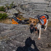Some backpacking dogs on the summit...