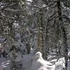 Snow scenes 2.
