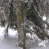 Deep snow reaches for the trail blaze.