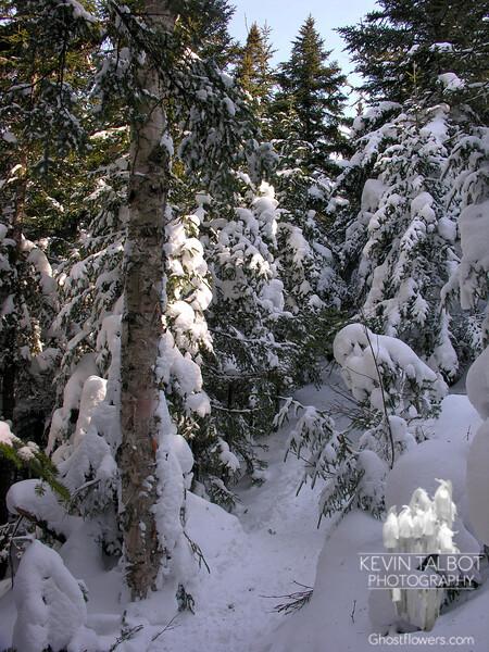 Trail through the sugarbush.