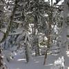Snow scenes 1.