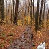 Wet trail.